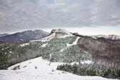 Kind on mountain Demerdzhi-northern — Zdjęcie stockowe