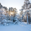 Winter landscape with snow — Stock Photo #7719524