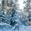 Winter landscape with snow — Stock Photo #7719527