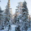 Winter landscape with snow — Stock Photo #7719531