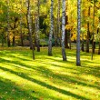 Beautiful autumn landscape with the sun and shades in a birchwood — Stock Photo
