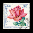 Stamp Rose — Stock Photo