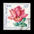 Stamp Rose — Stock Photo