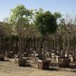 Tree Nursery — Stock Photo
