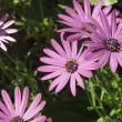 Purple Flowers — Stockfoto