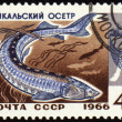 Baikal sturgeon on post stamp — Stock Photo