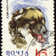 Caucasian Shepherd on post stamp — Stock Photo