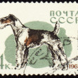 Fox terrier on post stamp — Stock Photo