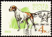 Pointer on post stamp — Stock Photo