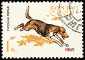 Russian Hound on post stamp — Stock Photo