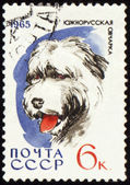 South Russian Shepherd Dog on post stamp — Stock Photo