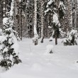 Fresh snow in winter forest — Stock Photo