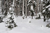 Fresh snow in winter forest — Stok fotoğraf