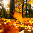 Fallen leaves — Stock Photo #6942621