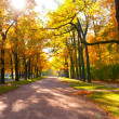 Autumn park — Stock Photo #6944616