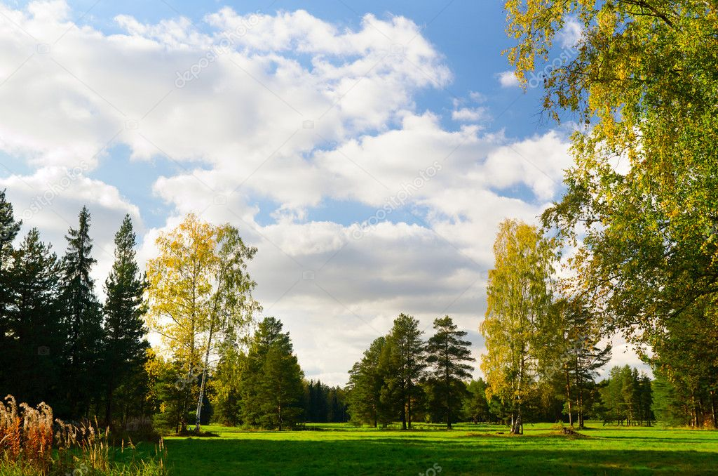 Beautiful autumn park view at sunny weather — Stock Photo #7034352