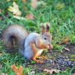 Squirrel — Stock Photo #7589384