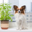 Dog and flower on window — Stock Photo #7761973