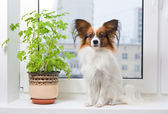Dog and flower on window — Stock Photo