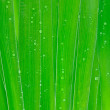 Green Leaves with drops — Stock Photo