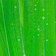Stock Photo: Green Leaves with drops