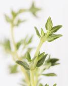 Fresh fragrant thyme — Stock Photo