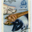Stamp  shows pigs - Stock Photo