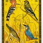 Постер, плакат: Birds 4