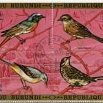 Birds 2 — Stock Photo
