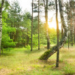Pine forest — Stock Photo #6845175