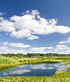 Wonderful forest lake. — Stock Photo