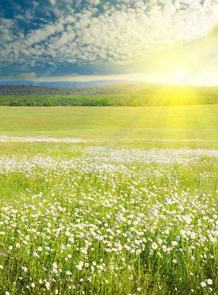 Field Of Flowers Sunrise