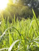 Summer season nature background — Stock Photo