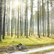 Sunny pine forest — Stock Photo #7623199