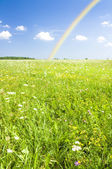 Green field with a rainbow. — Stock Photo
