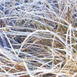 Foto de Stock  : Frozen grass with ice.
