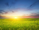 Sunset on flower meadow. — Stock Photo