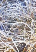 Gelée d'herbe avec de la glace. — Photo
