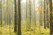 Morning in autumn wood. — Stock Photo