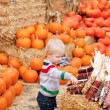 Stock Photo: Toddler at the pumpkin patch