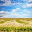 Sky and fields — Foto Stock