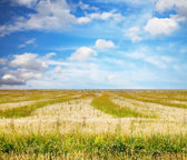 Sky and fields — Stockfoto
