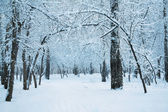 Frozen woods — Stockfoto