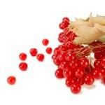 Red viburnum — Stock Photo #6915110