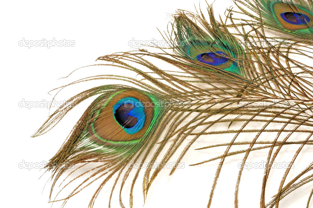 Peacock Feathers Stock Photos And Images  123RF