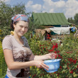 Young woman with crop of red currant in garden . — Stockfoto