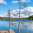 Pines on lake background - Stock Photo