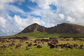 Ranu raraku murs du cratère sur l'île de pâques — Photo