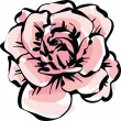 Vector de stock : Delicate rose flower
