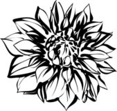 Black and white sketch of chrysanthemum — Stock Vector
